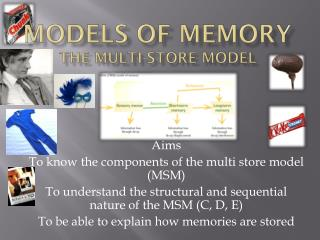 Models of Memory The Multi-store Model