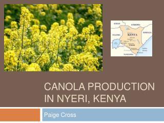 Canola production in nyeri, kenya