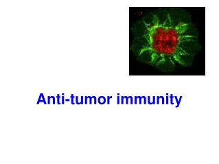 Anti-tumor immunity