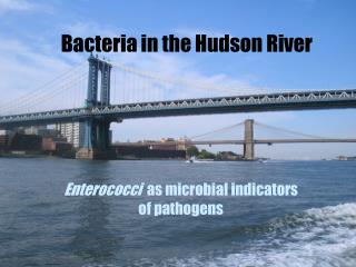 Bacteria in the Hudson River