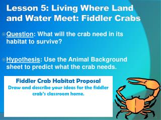 Lesson 5: Living Where Land and Water Meet: Fiddler Crabs