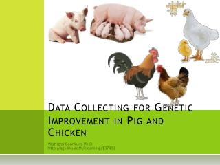 Data Collecting for Genetic  Improvement in Pig and Chicken