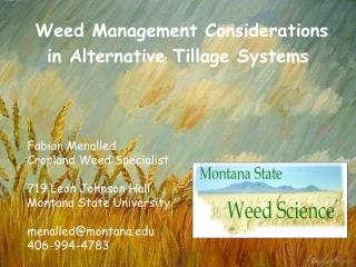 Weed Management Considerations in Alternative Tillage Systems