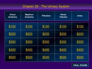 Chapter 25 - The Urinary System