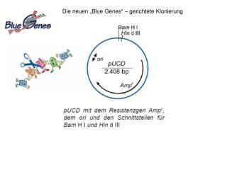 """Die neuen """"Blue Genes"""" – gerichtete Klonierung"""