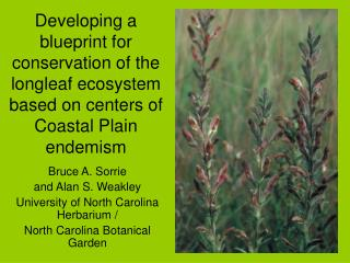 Bruce A. Sorrie  and Alan S. Weakley University of North Carolina Herbarium /