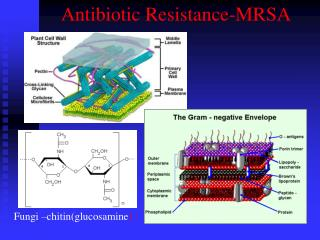 Antibiotic Resistance-MRSA
