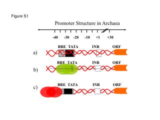 Promoter Structure in Archaea