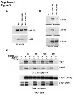 Supplement Figure 5