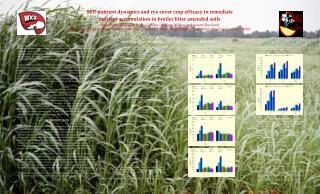 Soil nutrient dynamics and rye cover crop efficacy to remediate