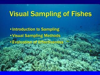 Visual Sampling of Fishes