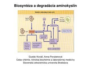 Biosyntéza a degradácia aminokyslín