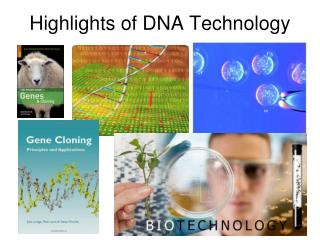 Highlights of DNA Technology