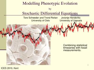 Modelling Phenotypic Evolution  by Stochastic Differential Equations