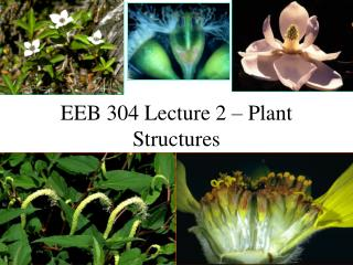 EEB 304 Lecture 2   Plant Structures