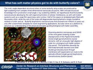 What has soft matter physics got to do with butterfly colors?