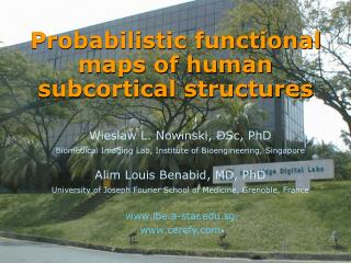 Probabilistic functional maps of human subcortical structures