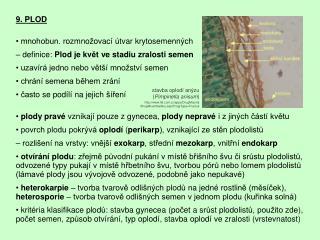 9. PLOD • mnohobun .  rozmno ž ovací útvar krytosemenných