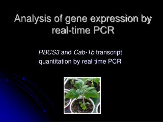 Analysis of gene expression by real-time PCR
