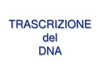 TRASCRIZIONE del  DNA