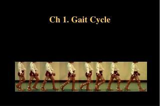 Ch 1. Gait Cycle