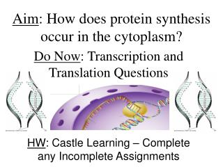 Aim : How does protein synthesis occur in the cytoplasm?