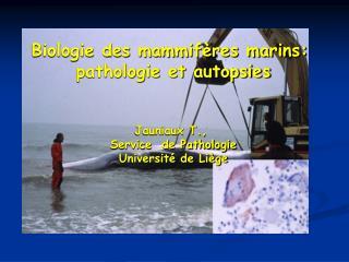 Biologie des mammifères marins:  pathologie et autopsies Jauniaux T.,  Service  de Pathologie
