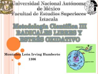 Montañez  León Irving Humberto 1306