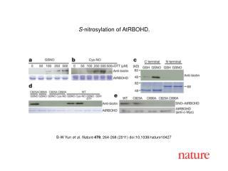 B-W Yun  et al. Nature 478 , 264-268 (2011) doi:10.1038/nature10427