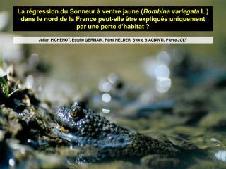 La r gression du Sonneur   ventre jaune Bombina variegata L. dans le nord de la France peut-elle  tre expliqu e uniqueme