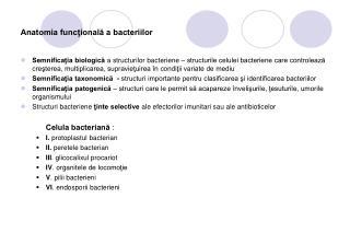 Anatomia funcţională a bacteriilor