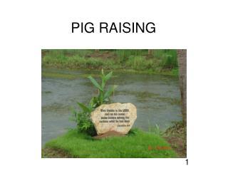 PIG RAISING