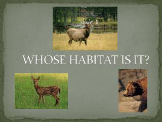 WHOSE HABITAT IS IT