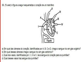A) Impulso nervoso B) Neurotransmissor  C) Potencial de Ação D) Potencial de repouso