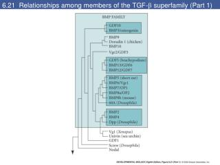 6.21  Relationships among members of the TGF-   superfamily (Part 1)