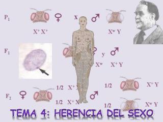 Tema 4: Herencia del sexo