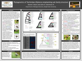 Phylogenetics of Tachinidae (Diptera) emphasizing sub-family structure
