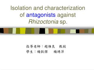 Isolation and characterization of  antagonists  against  Rhizoctonia  sp.