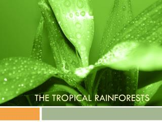 THE Tropical  rainforests