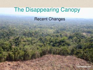 The Disappearing Canopy