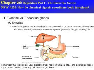Chapter 26:  Regulation Part I - The Endocrine System