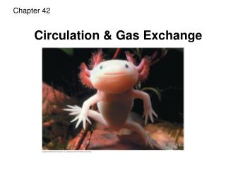Circulation  Gas Exchange