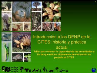 Introducción  a los DENP de la CITES:  historia y práctica  actual