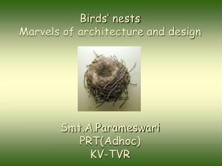 Birds� nests  Marvels of architecture and design