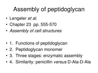 Assembly of peptidoglycan