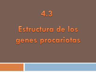 Estructura de los  genes procariotas