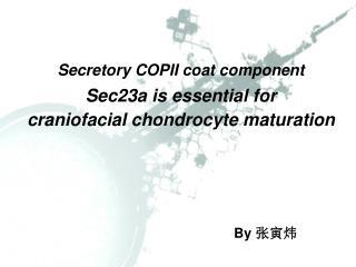 Secretory COPII coat component Sec23a is essential for craniofacial chondrocyte maturation