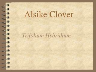 Alsike Clover