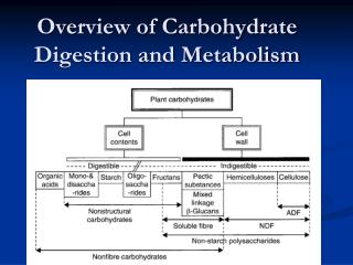 Overview of Carbohydrate Digestion and Metabolism