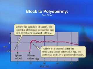 Block to Polyspermy: Fast Block